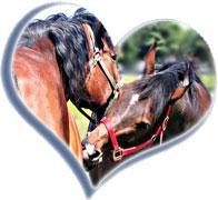 horse-heart